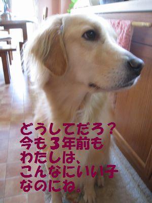 IMG_7275.jpg