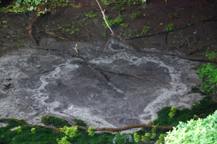 柿田川湧水群湧水