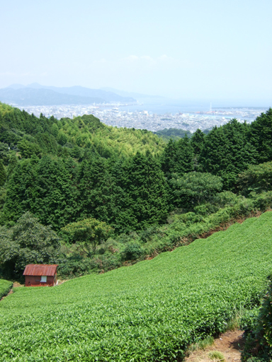 日本平から清水港をのぞむ