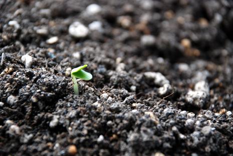 土の再生芽が