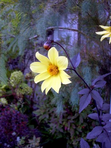 CIMG2798-20081006-1.jpg