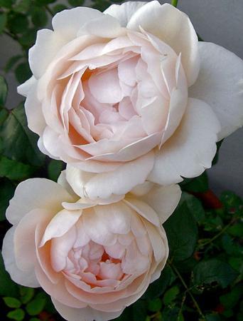 CIMG3513-20081114-3.jpg