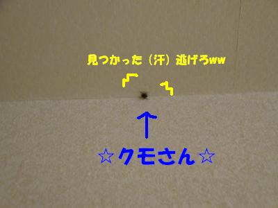 DSC00318_convert_20080818222555.jpg