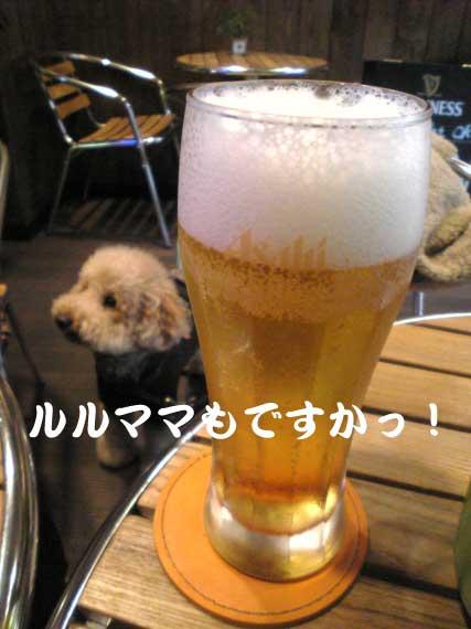 龍とビール