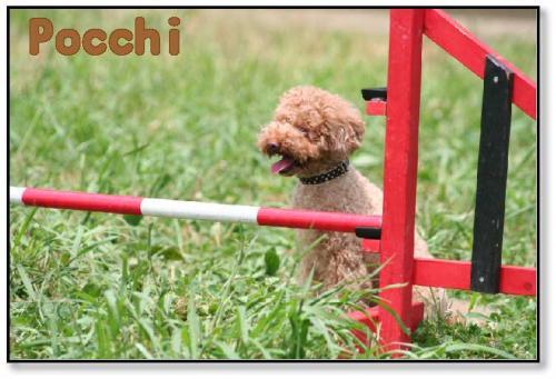 pocchi.jpg