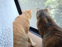 見張り中の二人2