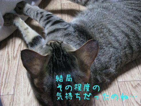 IMG_0949にゃん