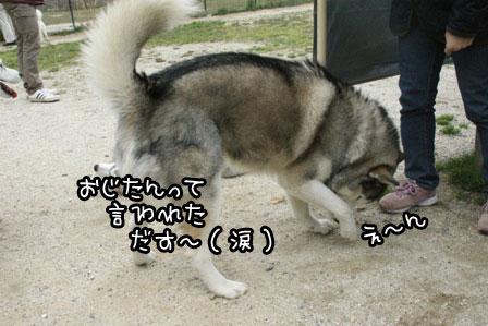 25_20120402221110.jpg