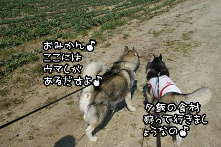 3_20120329222134.jpg