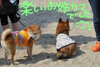 ポチ武蔵さん
