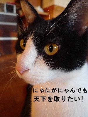 2011_0104花0005