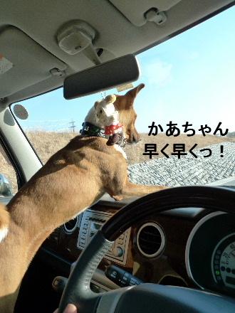 2011_0205花0032