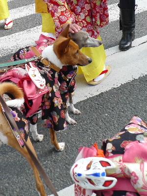 2011_0227花0028