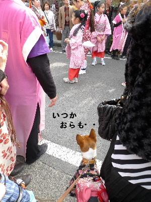 2011_0227花0166
