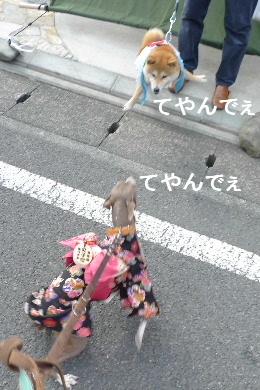 2011_0227花0075
