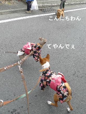 2011_0227花0046