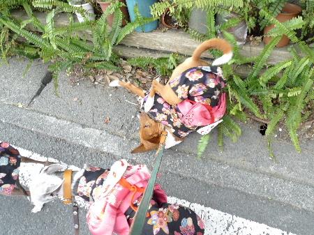 2011_0227花0044