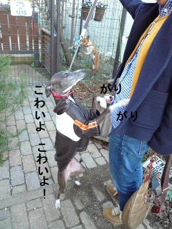 2011_0302花0012