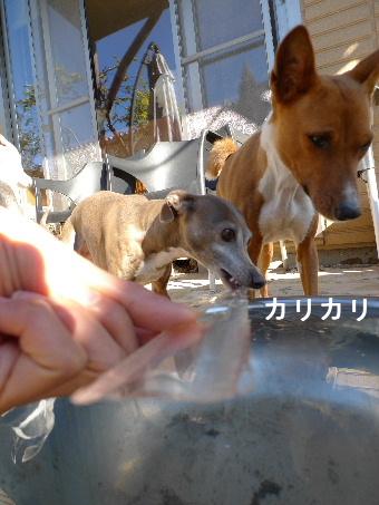 2011_0304花0020