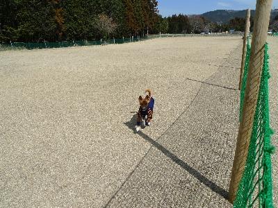 2011_0306花0046