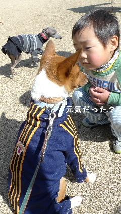 2011_0306花0021