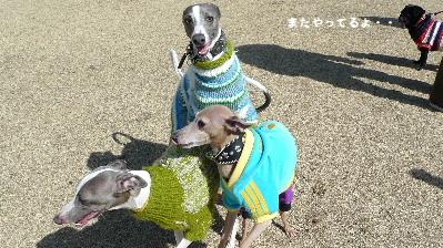 2011_0306花0024