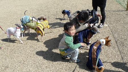2011_0306花0019