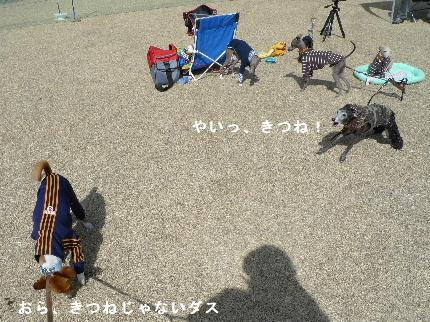 2011_0306花0047
