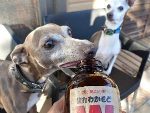 2011_0210花0009