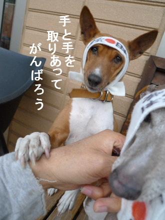 2011_0314花0078