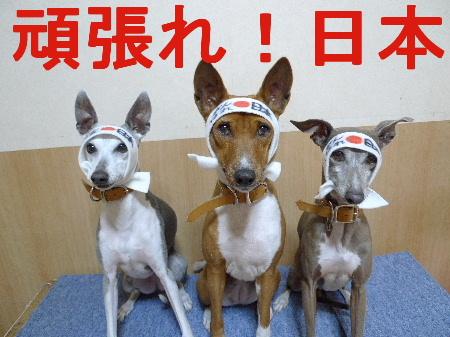 2011_0314花0093