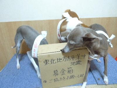2011_0315花0042