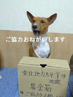 2011_0315花0035