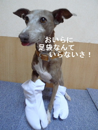 2011_0319花0032
