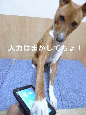 2011_0321花0007