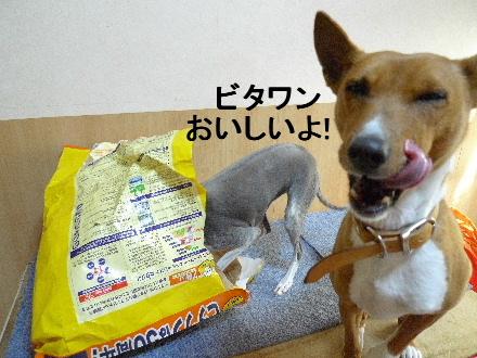 2011_0323花0027