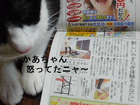 2011_0325花0043