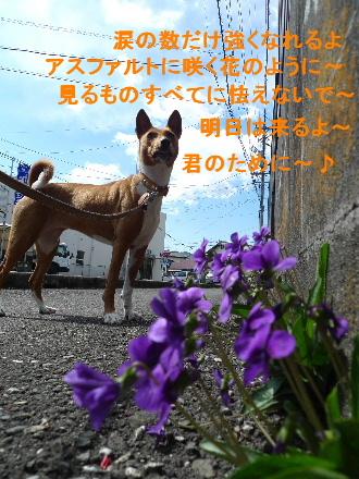 2011_0326花0007