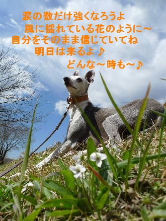 2011_0326花0019