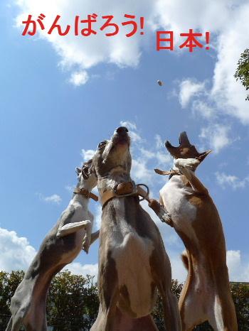 2011_0327花0038