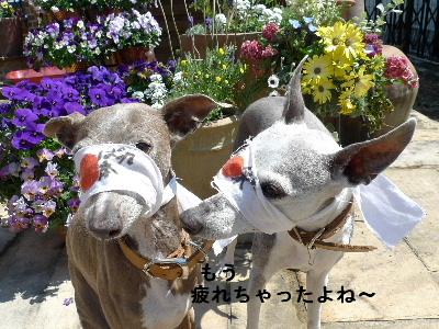 2011_0329花0029