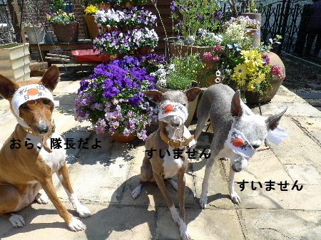 2011_0329花0031