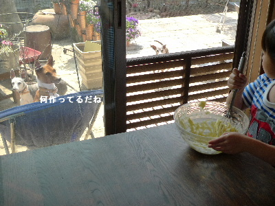 2011_0330花0020