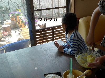 2011_0330花0021