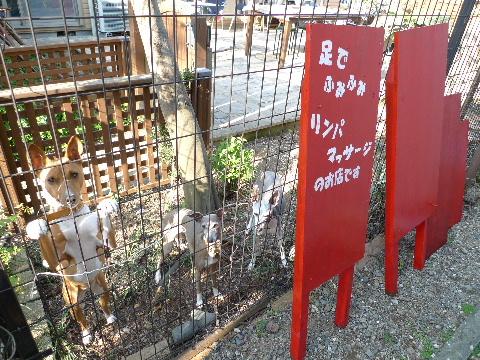 2011_0414花0046