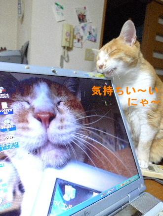 2011_0421花0001