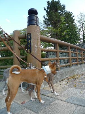 2011_0424花0006