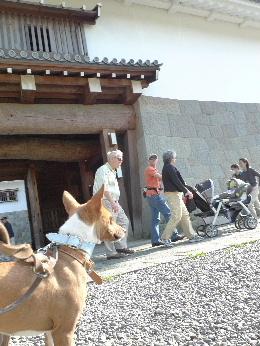 2011_0424花0033