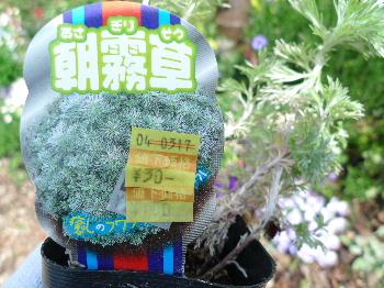2011_0411花0001