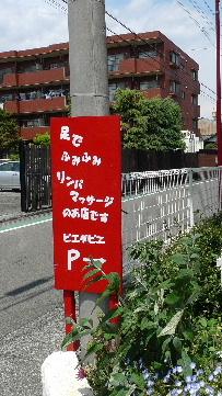 2011_0425花0007